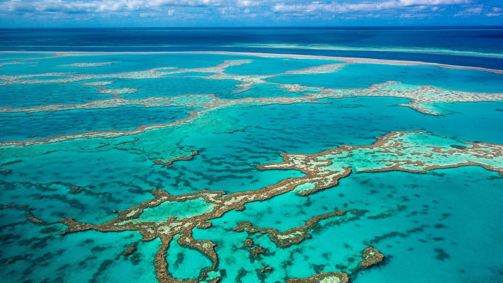 great barrier reef_coral reef